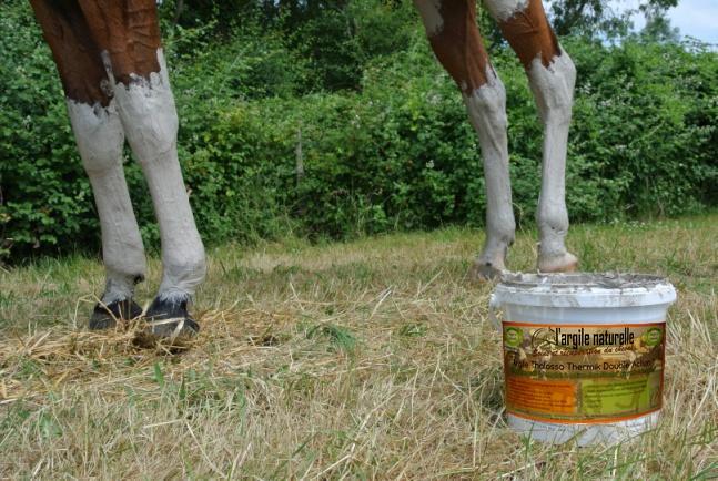 argile-cheval