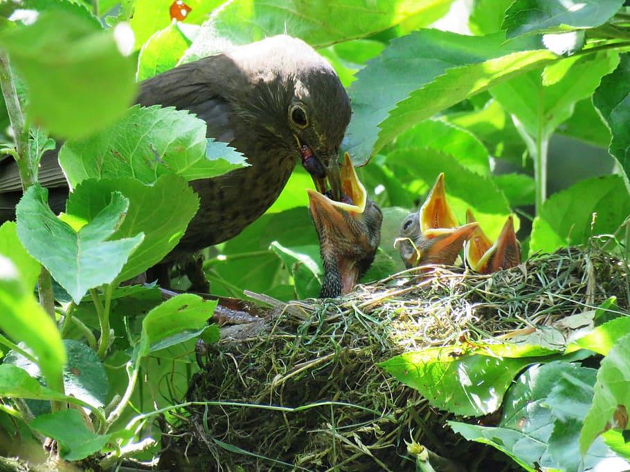 blackbird-ne...